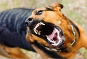 Laws To Help Dog Bite Victims
